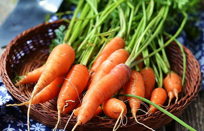 cà rốt mọc mầm có ăn được không
