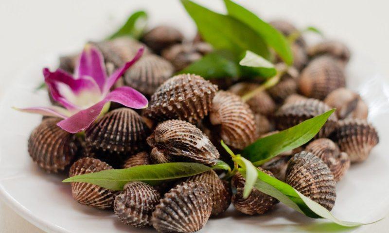 Cách bảo quản sò huyết tươi lâu giữ trọn hương vị cho món ăn
